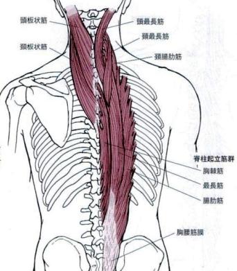首、肩、腰、足首、手首の痛みの治療なら金沢文庫駅・釜利谷東の「和ごころ整骨院」
