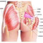 【永久保存版】坐骨神経痛は臀部のマッサージとストレッチが有効