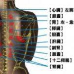 背中が痛い時は、内臓との因果関係・猫背の姿勢を正す