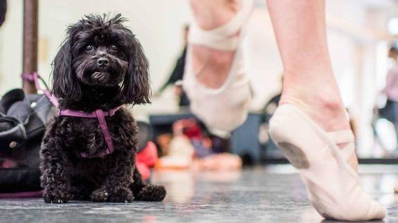 犬とバレエ