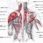 頚肩腕症候群について(頚から肩、腕にかけての痛み。いわゆる肩こり)